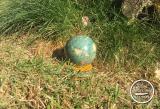 Nephrit-Kugel (586g)
