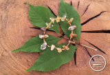 Citrin-Turmalin-Glasperlen Armband braun/oliv